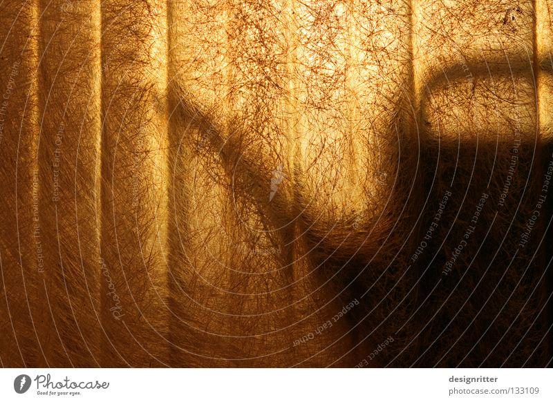 Angriff der Killergießkannen Gießkanne Kannen Blume Sommer Physik heiß trocken Dürre Sonne Licht Beleuchtung durchscheinend Schlagschatten glänzend schimmern