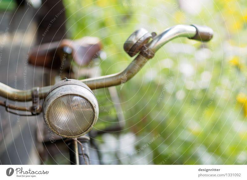 Treuer Freund Natur alt grün Sommer Erholung Senior Stil Lampe Design Zufriedenheit elegant Fahrrad ästhetisch Ausflug warten Fahrradfahren