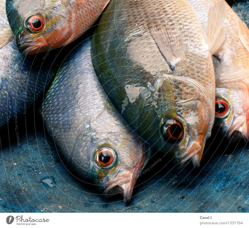 Catch of the day Fisch Sushi Ferien & Urlaub & Reisen tauchen Angeln Korallenriff Meer Coolness Ekel kalt blau Freizeit & Hobby Tod Farbfoto Nahaufnahme Tag