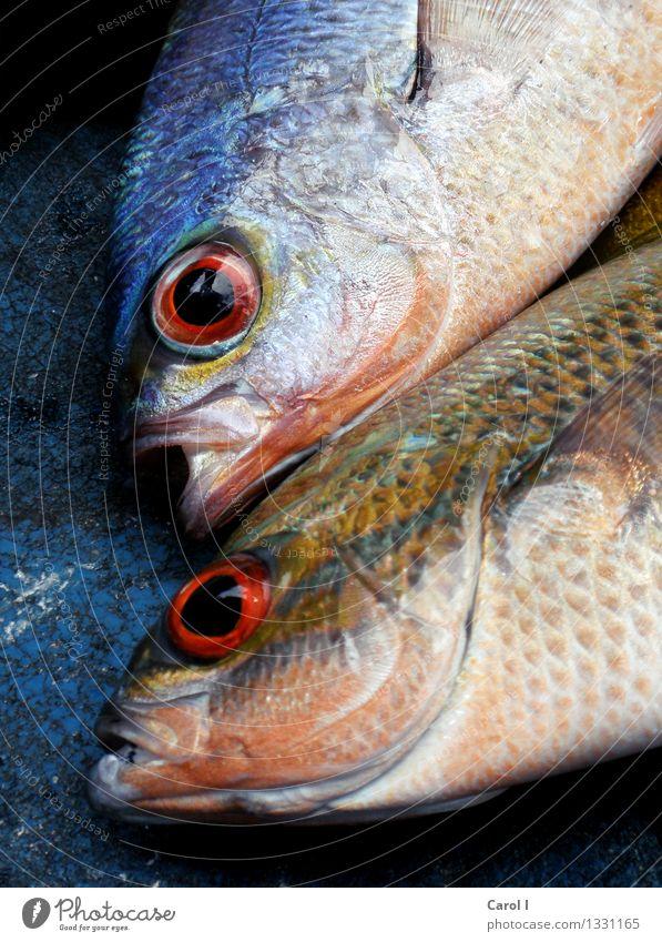 I>O Fisch Sushi Angeln Essen Fischer Kopf Auge Wasser Meer See Tierpaar Coolness Ekel kalt nass blau bizarr Tod Farbfoto Nahaufnahme Tag Zentralperspektive