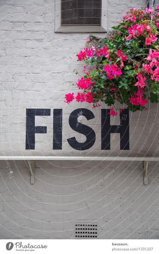 fish. Lebensmittel Fisch Ernährung Abendessen Festessen Bioprodukte Gesundheit Ferien & Urlaub & Reisen Städtereise Restaurant Essen Blume Blüte Bauwerk Gebäude