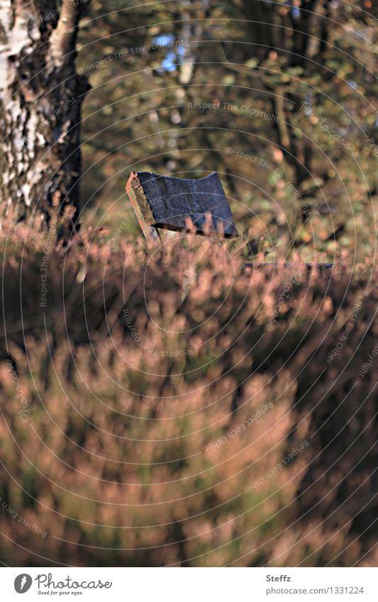 Pause in der Heide im Oktoberlicht Calluna Birke Sitzbank Holzbank erholen ausruhen Erholung Pause machen verblühte Heide mysteriöse Heide Einsamkeit altmodisch
