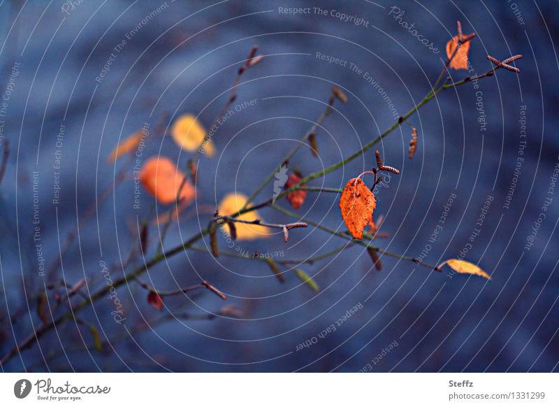 Im Kreislauf der Jahreszeiten Natur Pflanze Wasser Herbst Sträucher Blatt Zweig Zweige u. Äste Herbstlaub verblüht blau orange Herbstgefühle Novemberstimmung