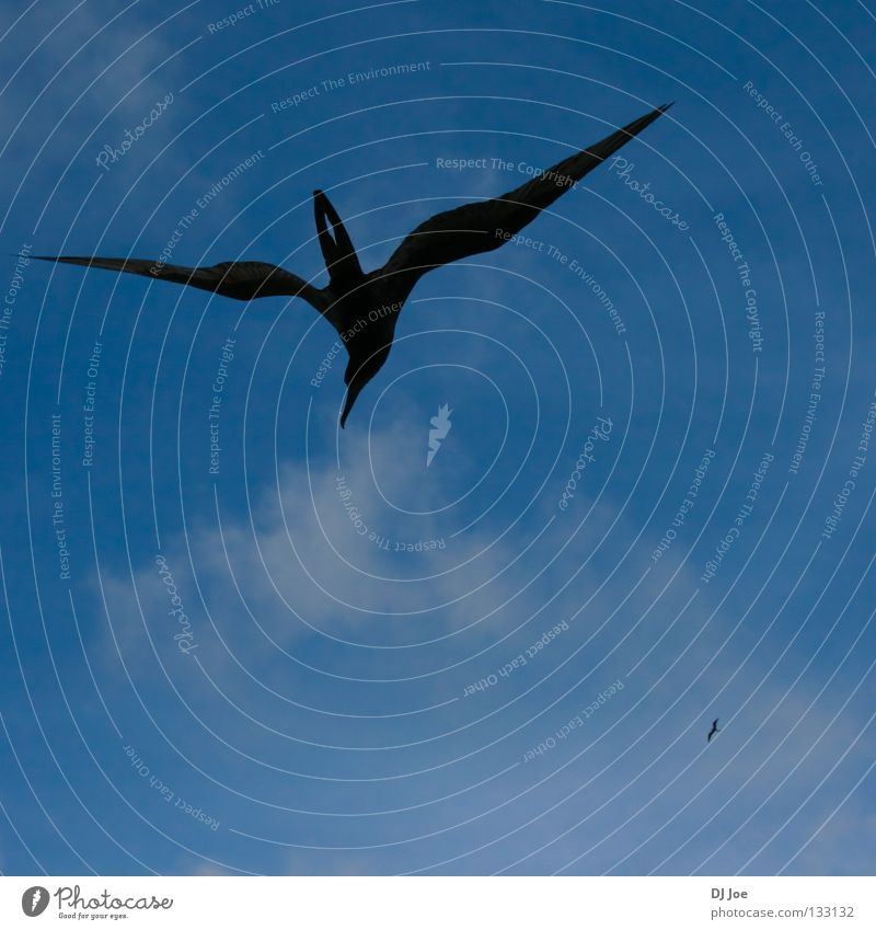 die Luft durchschneiden Vogel Schweben Himmel fliegen blau frei Wind