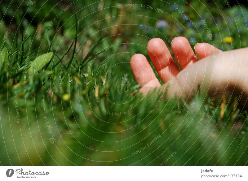 ich bin ein gänseblümchen... Hand grün Ferien & Urlaub & Reisen Pflanze Sommer Blume ruhig Erholung Wiese Gras Garten Frühling warten liegen frisch Finger