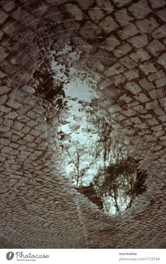 Steine am Himmel Pfütze Spiegel Reflexion & Spiegelung Baum unten drehen Katzenkopf Granit Bürgersteig steinig Ferne Gedanke Mauer entwenden dunkel gehen