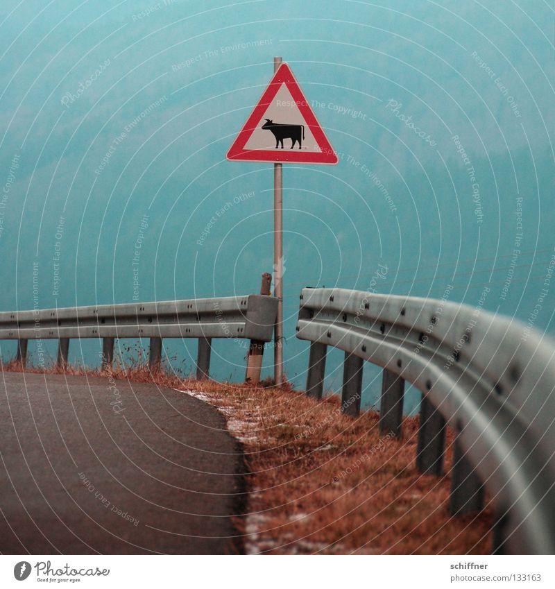 Achtung tieffliegende Kühe! Straßennamenschild Verkehrsschild Straßenverkehr Kuh Rind Vieh Tier gefährlich Leitplanke Kurve Am Rand luftig Teer Fahrbahn