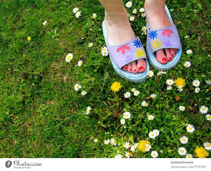 Viele Blümchen Wiese Gras Gänseblümchen Löwenzahn Blume Schlappen Badelatschen Nagellack Zehen grün gelb weiß violett mehrfarbig Freude Frühling Sommer Fuß