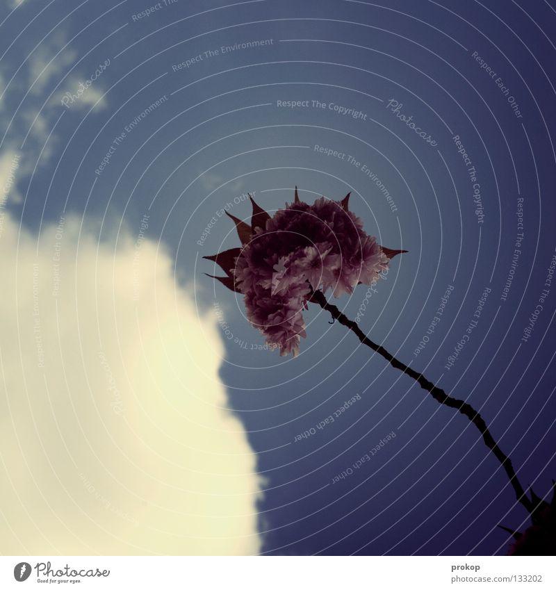 Gebärdensprache für Verliebte Himmel schön Sommer Freude Wolken ruhig Einsamkeit Gefühle Blüte Wärme Frühling Beleuchtung Ast Klarheit zart Physik