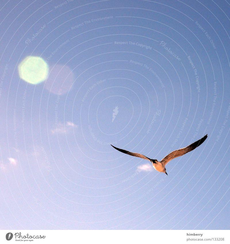 mövenpic Himmel Sonne blau Sommer Freiheit Vogel fliegen Luftverkehr Feder Flügel Segeln gleiten