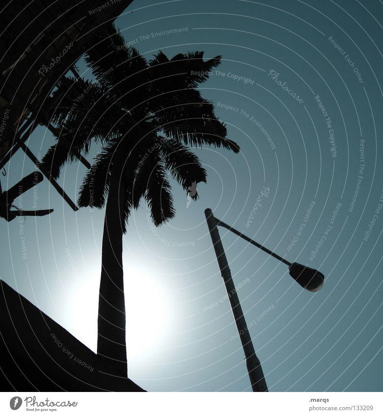 Illuminate Sonne blau Pflanze Sommer Ferien & Urlaub & Reisen Blatt schwarz Gebäude Wärme Beleuchtung verrückt Macht Physik heiß Laterne Indien