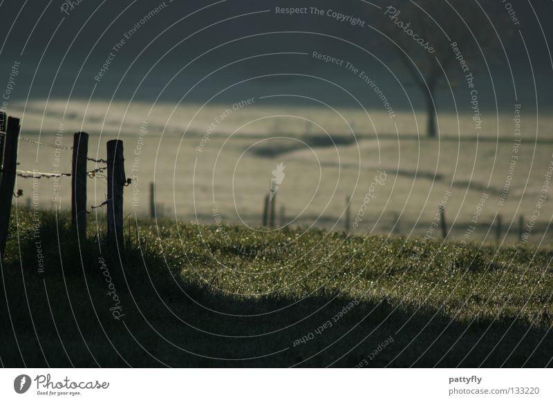 I--I-I-- Wiese Zaun Tau Gras Morgen Baum Raureif grün weiß grau Grenze Natur Ferne abgegrenzt Schatten