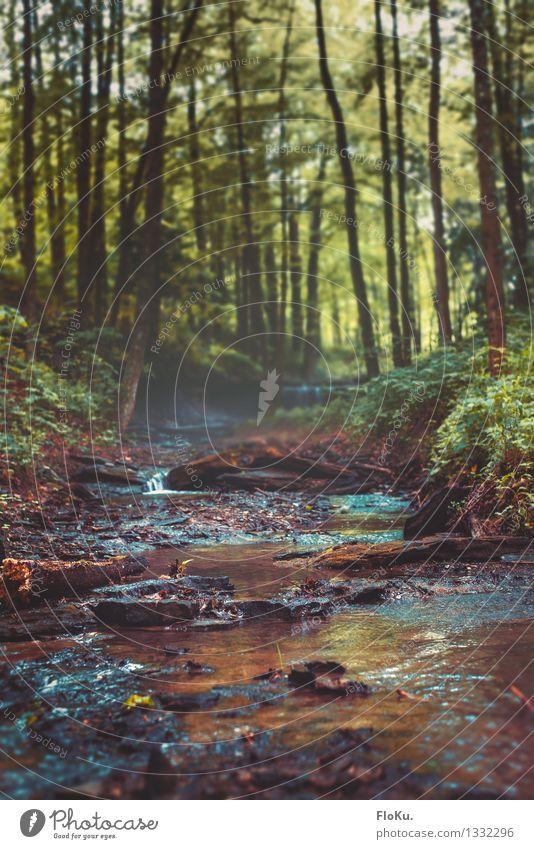 kleines Bächlein im Unterholz Natur Pflanze grün Sommer Wasser Baum Landschaft Wald Umwelt Gras natürlich braun Park Regen Nebel Erde