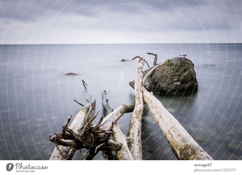 Am Meer Natur Luft Wasser Wolken Horizont Baum Küste Ostsee Tier Wildtier Vogel Möwe 1 Unendlichkeit maritim blau grau grün Wasseroberfläche Himmel Wolkenhimmel