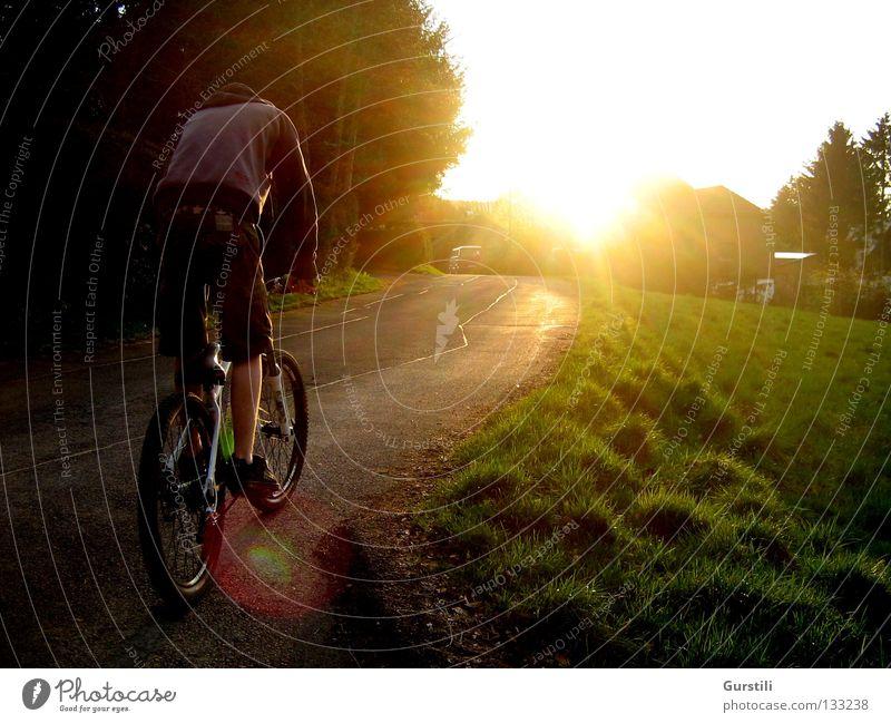 Fahrt in die Abendsonne Farbfoto Außenaufnahme Licht Sonnenstrahlen Spielen Fahrradfahren Natur Sonnenaufgang Sonnenuntergang Sommer Schönes Wetter Gras Wiese