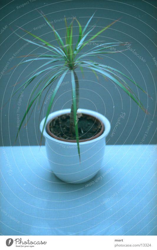 palm geschlossen hause