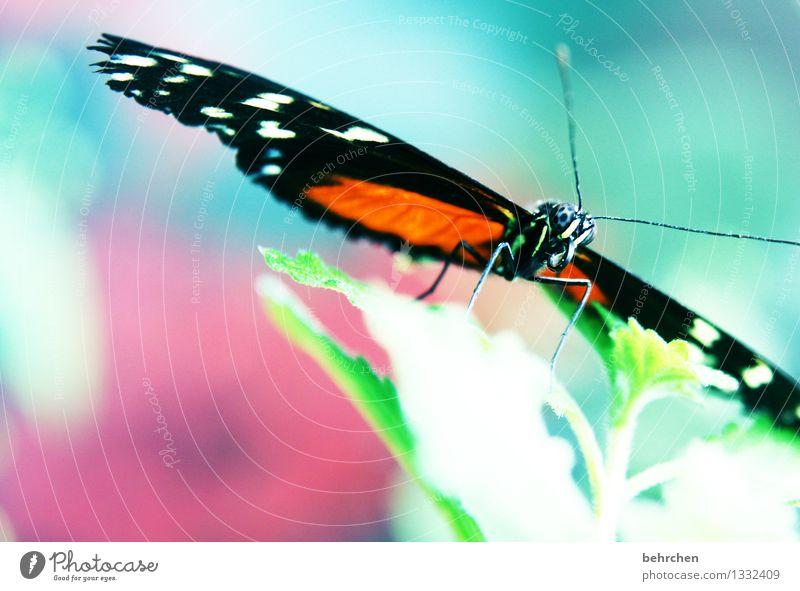 bonbon Natur Pflanze schön Sommer Baum Erholung Blatt Tier Frühling Wiese Garten außergewöhnlich Beine fliegen rosa Park