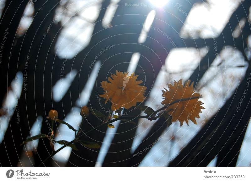 Waldwunder Natur schön Baum Sonne Blume Sommer ruhig gelb Wald Bewegung Frühling Denken Linie hell Romantik Dynamik