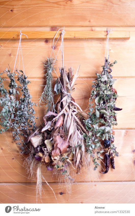 ins Trockene gebracht Kräuter & Gewürze Küchenkräuter Küchenkraut Heilkräuter trocknen getrocknet Pflanze Hütte Holzwand hängen Duft gut natürlich retro trocken