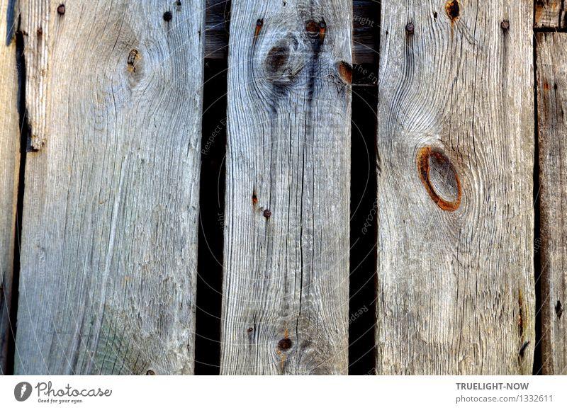 Alte Bretter Natur schwarz Wand Senior Mauer Holz grau Zeit braun Ordnung Tür ästhetisch Armut bedrohlich Vergänglichkeit Wandel & Veränderung