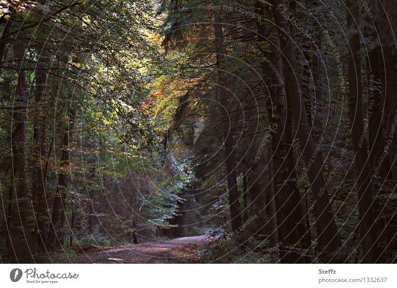 Spazierweg im Wald Herbstwald Waldbaden dichter Wald verwunschener Wald September tief im Wald Waldstimmung Vergänglichkeit Herbstbeginn Stille ruhig