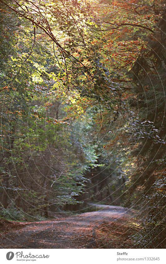 Waldbaden im September Herbstwald Jahreszeitenwechsel Licht durch Blätter Kreislauf der Natur Laubwald Laubbäume vergänglich Waldstimmung tief im Wald