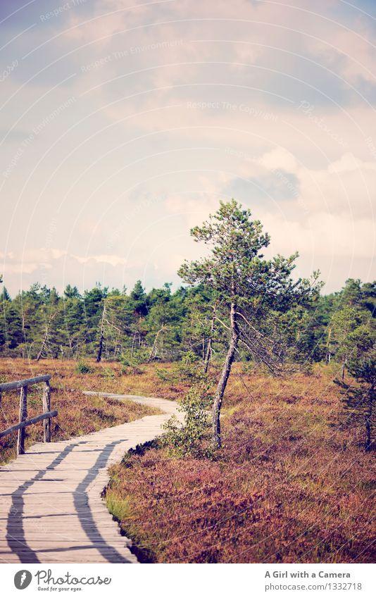 Schwarzes Moor Umwelt Natur Landschaft Pflanze Urelemente Himmel Wolken Herbst Schönes Wetter Baum Wald Sumpf wild Rhön Brachland Naturschutzgebiet