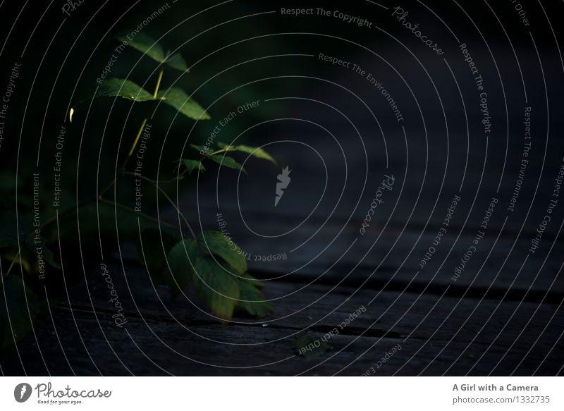 es düstert Umwelt Natur Pflanze Sommer Herbst Blatt dunkel grün Wege & Pfade Holzpfad Gedeckte Farben Außenaufnahme Detailaufnahme Experiment Menschenleer