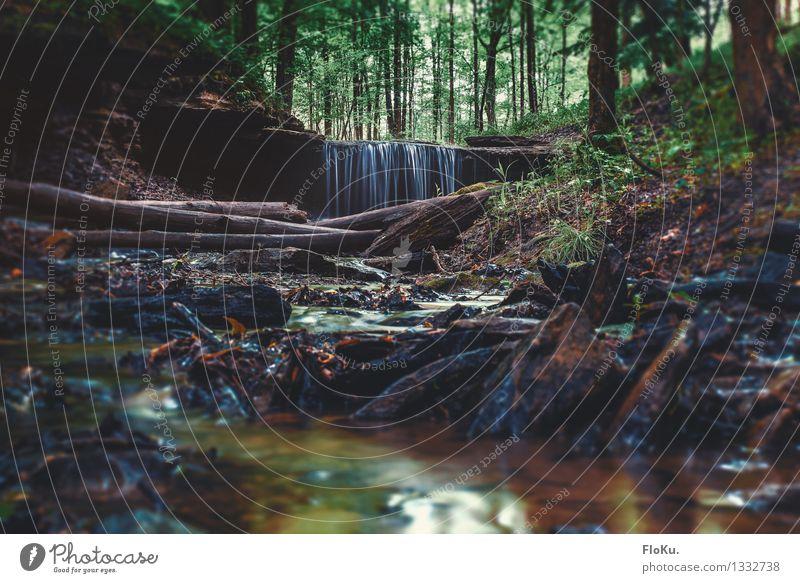 Das Wasserfällchen Ferien & Urlaub & Reisen Ausflug Abenteuer Camping Sommer Umwelt Natur Landschaft Pflanze Urelemente Erde Regen Baum Sträucher Moos