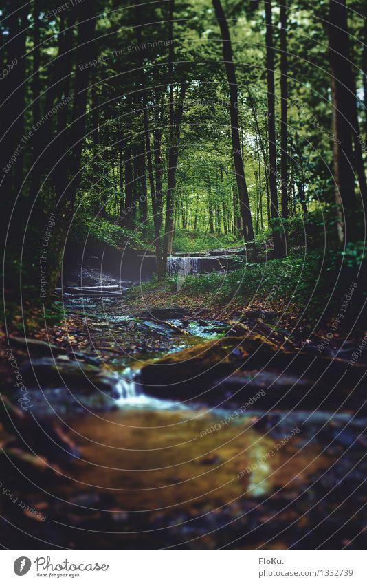 kleiner Bach im Wald Ferien & Urlaub & Reisen Ausflug Abenteuer Umwelt Natur Landschaft Pflanze Urelemente Erde Wasser Sommer Baum Moos Urwald Fluss Wasserfall