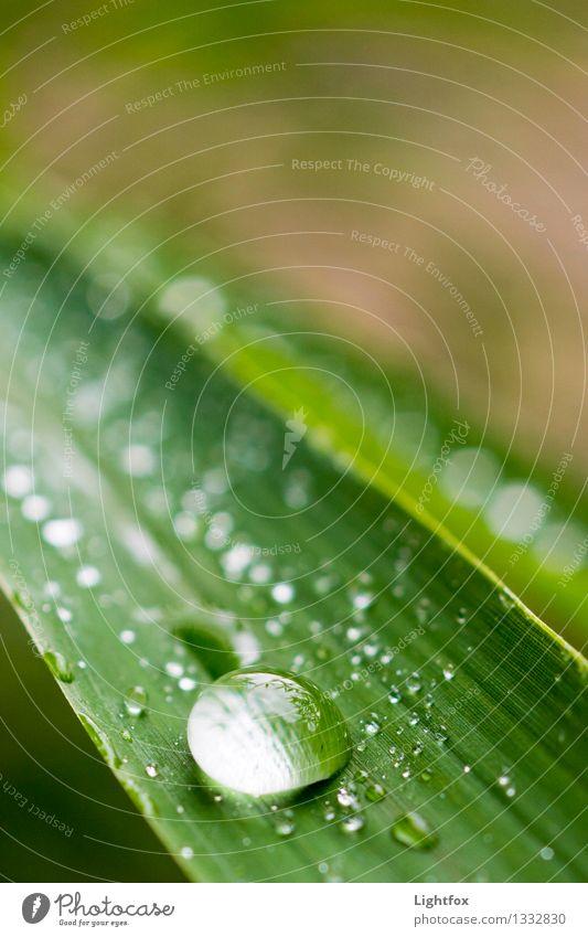 Dropje elegant Design schön Pflanze Bambus Fargesia Leben Wellness Erholung ruhen Blatt Tau Taufrisch Reinheit grün Zufriedenheit ruhig Zeit Glatze Lupe Wasser