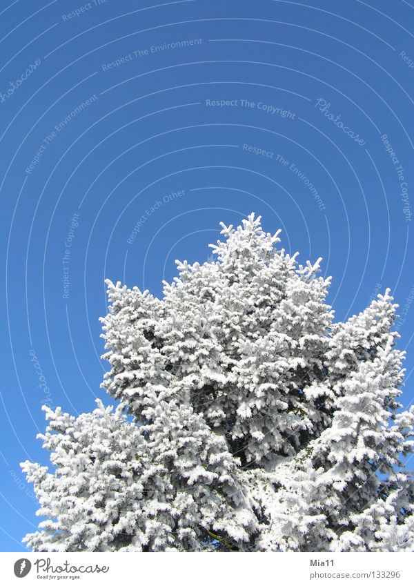 brrrrr kalt weiß Baum blau Winter Schnee Eis Raureif