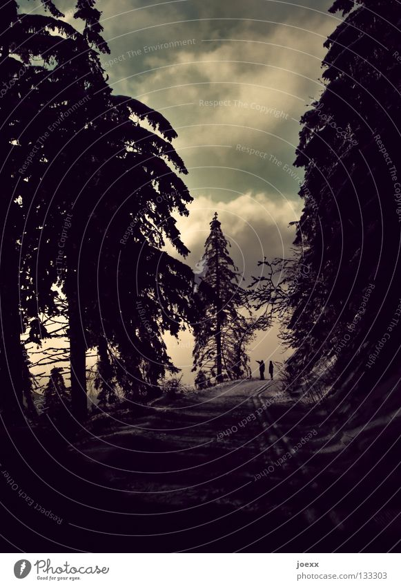 Zeig mir den Weg Himmel Natur Einsamkeit Wolken ruhig Wald Ferne Schnee sprechen Denken Paar Angst laufen Spaziergang Klarheit Ende
