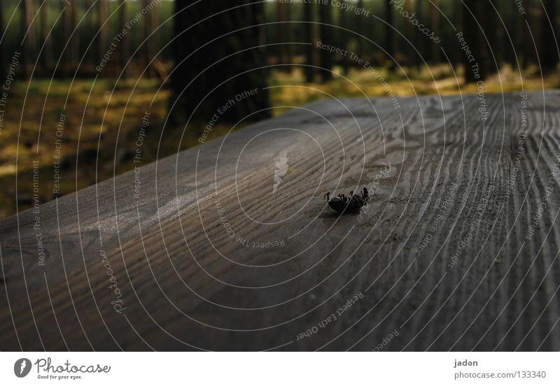 Karl VI Baum ruhig Wald Leben Spielen Tod Holz Tisch Bank Spaziergang Ende liegen Insekt Vergänglichkeit Käfer töten