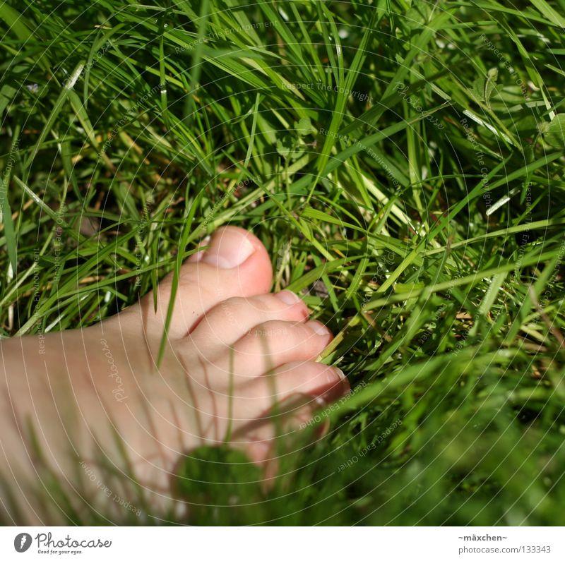 ohne Schuhe / without shoes II Barfuß gehen Gesundheit Gras Halm grün Klee Kleeblatt Nagel Sommer Wiese Zehen Mensch entstehen Erholung Fuß Haut Kitzel laufen