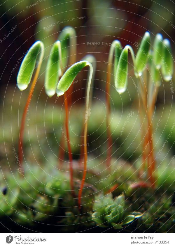 Lampions Natur grün rot schwarz Herbst Hintergrundbild glänzend weich nah obskur Teppich Moosteppich