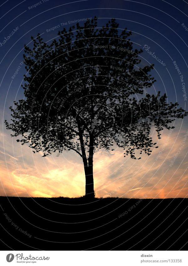 Der Baum Blatt Abend Sonnenuntergang Baumstamm Ast Wurzel Erde Abenddämmerung blau orange schwarz Silhouette ruhig Erholung Zufriedenheit Stimmung Mitte