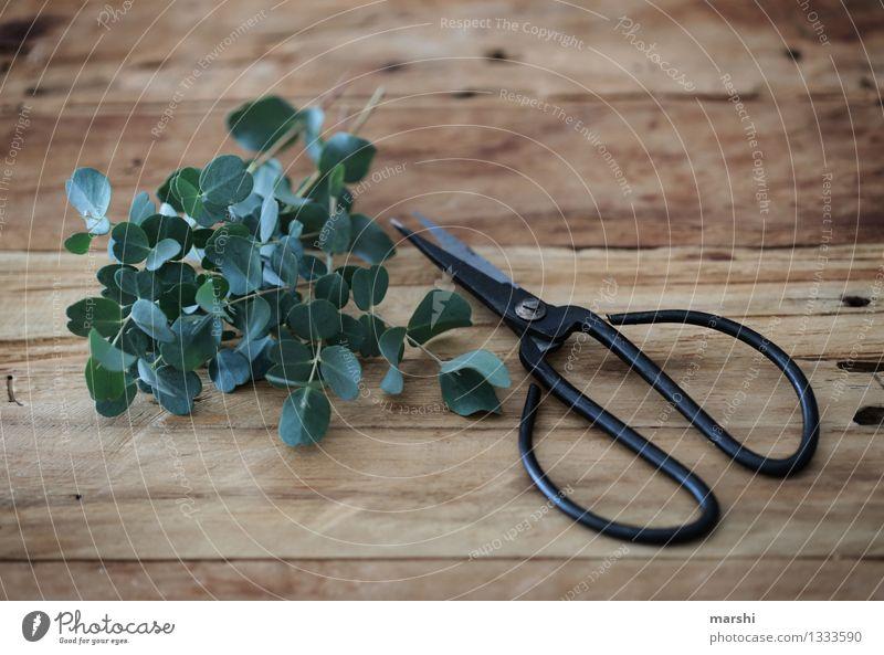 eukalyptus natur pflanze ein lizenzfreies stock foto von. Black Bedroom Furniture Sets. Home Design Ideas