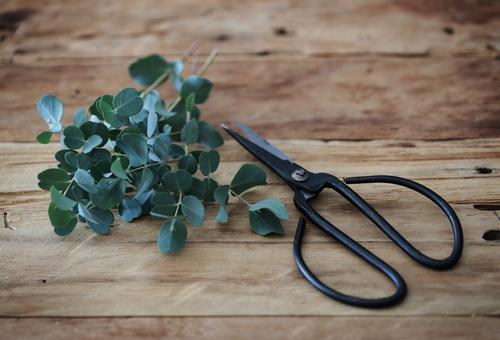 Eukalyptus Natur Pflanze grün Gefühle Garten Stimmung Arbeit & Erwerbstätigkeit Freizeit & Hobby Häusliches Leben Dekoration & Verzierung Sträucher Duft