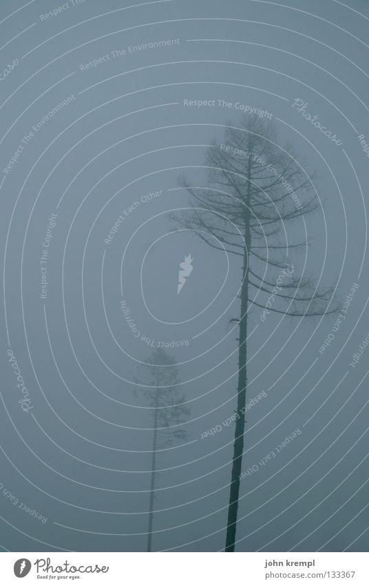 david und goliath blau Baum Winter dunkel grau Nebel Vergänglichkeit gruselig Sturm böse Kriminalroman Schrecken Hexe Nadelbaum Waldlichtung Grauen