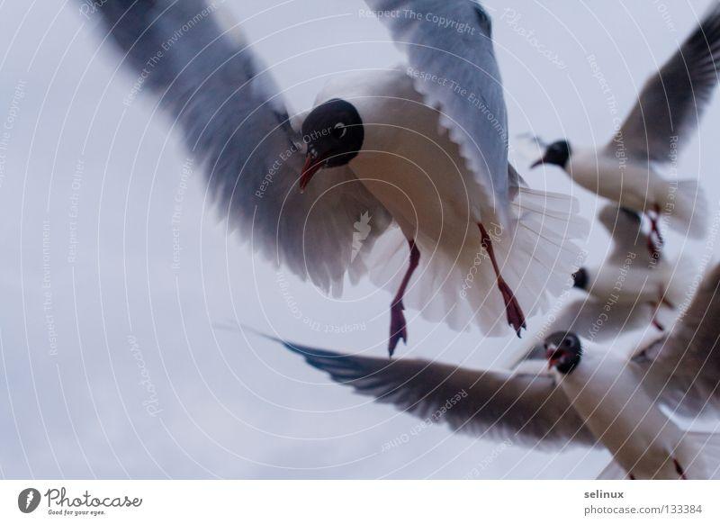 Hungry birds Himmel Meer Strand Vogel fliegen Appetit & Hunger Ostsee Möwe Rügen Tier