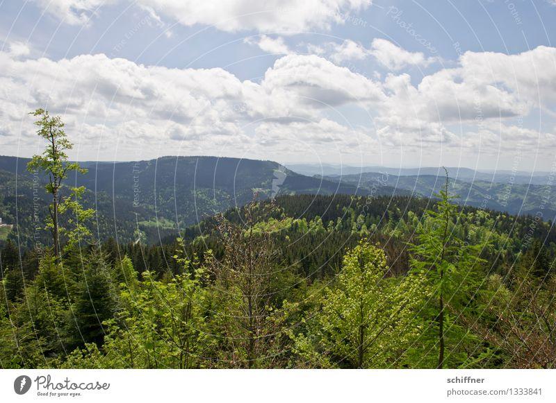wieso eigentlich schwarz? Umwelt Natur Landschaft Pflanze Himmel Wolken Schönes Wetter Baum Grünpflanze Wald Hügel Berge u. Gebirge grün Tanne Nadelbaum