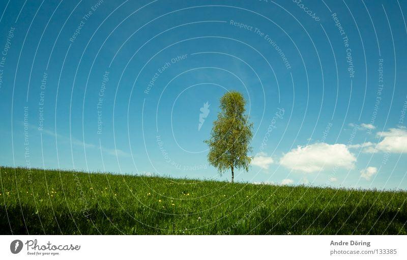 Birke Baum Wiese Hügel Himmel Wolken Horizont Ferne Freiheit Einsamkeit Raum