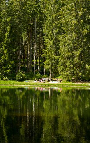 Picknick Natur Schönes Wetter Baum Wald Seeufer Teich grün Reflexion & Spiegelung Wasserspiegelung Gewässer Tanne Freizeit & Hobby Ausflug