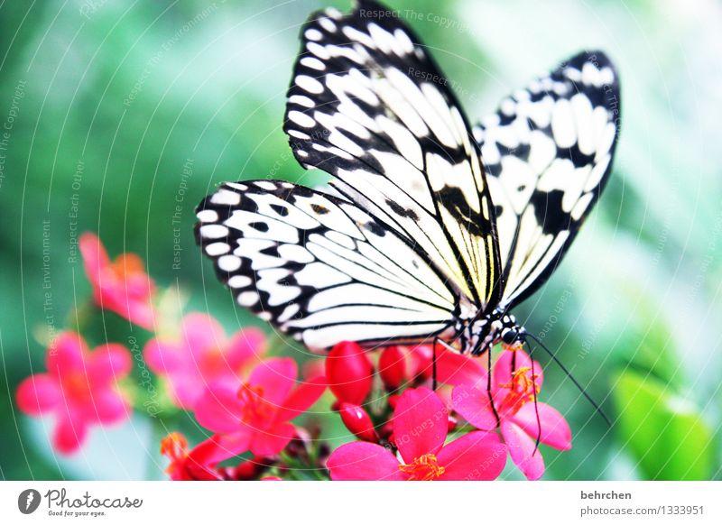 eingestaubt Natur Pflanze schön Sommer weiß Blume Erholung Blatt Tier schwarz Blüte Frühling Wiese außergewöhnlich Garten fliegen