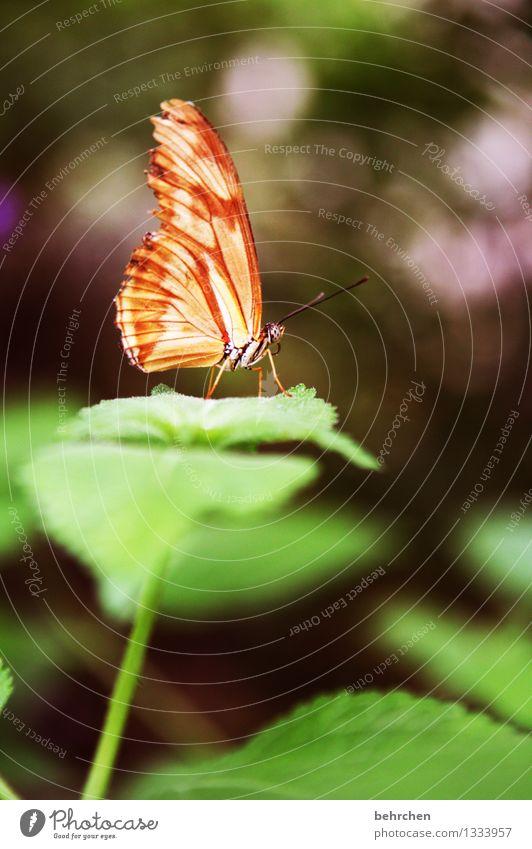 spot an! Natur Pflanze Tier Frühling Sommer Schönes Wetter Baum Sträucher Blatt Garten Park Wiese Wildtier Schmetterling Flügel 1 beobachten Erholung fliegen