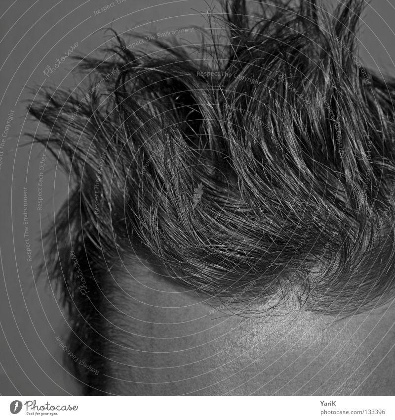 aufgestanden Mann Kopf grau Stil Haare & Frisuren geschlossen Wildtier dünn Müdigkeit Friseur durcheinander Behaarung geschnitten Stirn Haarschnitt