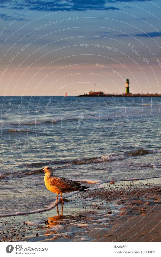 Ostseeküste Ferien & Urlaub & Reisen Strand Natur Landschaft Wasser Wolken Küste Meer Leuchtturm Tier Wildtier Vogel 1 Romantik Idylle Tourismus Möwe