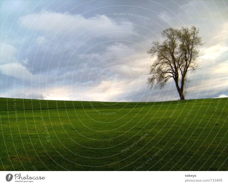 Mr. Lonley ruhig Berge u. Gebirge Golfplatz Himmel Wolken Frühling Unwetter Wind Regen Gewitter Baum Wiese Hügel Einsamkeit Grass Dämmerung