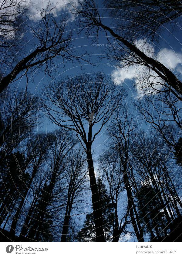 wolkenkratzer Wald Baum Himmel Wolken forest tree sky clouds
